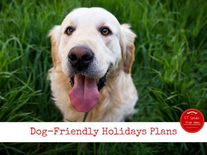 Dog-Friendly Holidays Plans