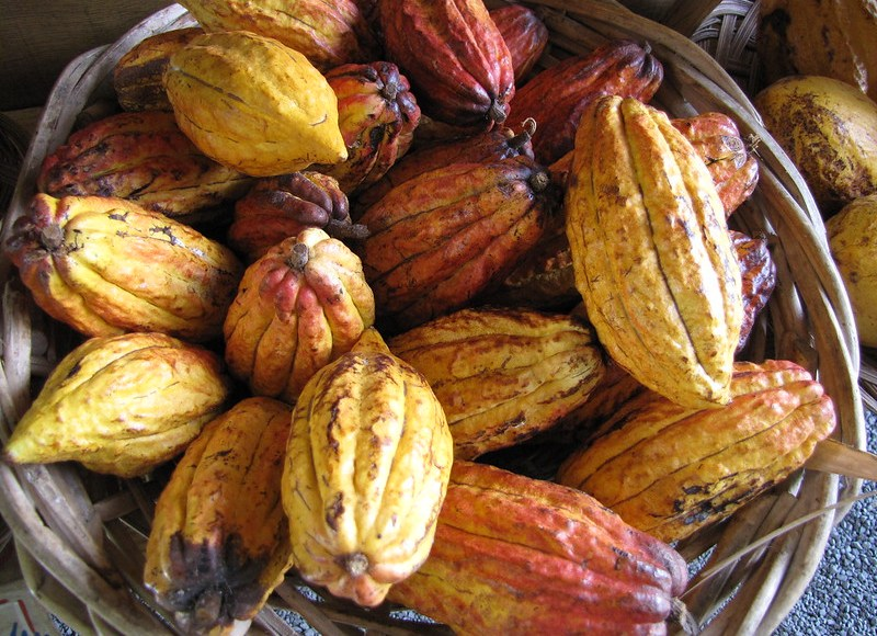 Achieving sustainability in the cocoa sector: the shared load of private and public policies