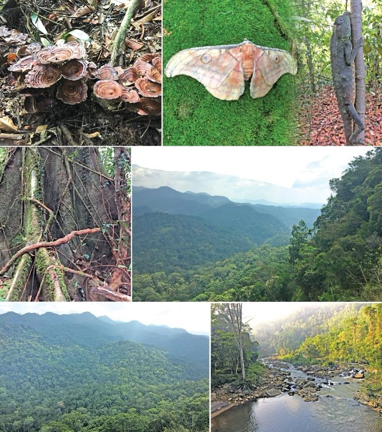 Sinharaja Rainforest - Waterfall - 2