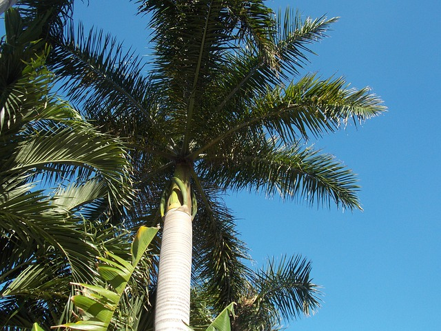 Fort Lauderdale hätte gerne Direktflug aus Deutschland