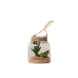 Terrarium plantes grasses Etxe Mia!
