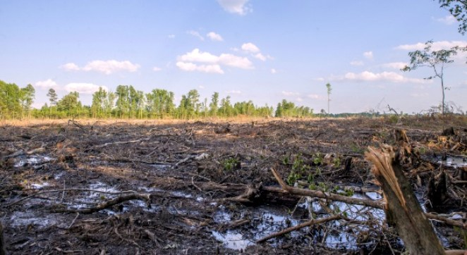 UK_Clear-cut forest in North Carolina, US (c) Dogwood Alliance2
