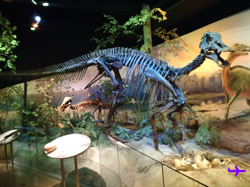 raleigh-museum_natural_sciences-dinossauro