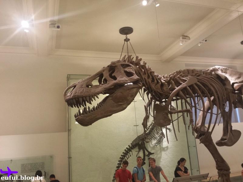 museu de historia natural dinossauro
