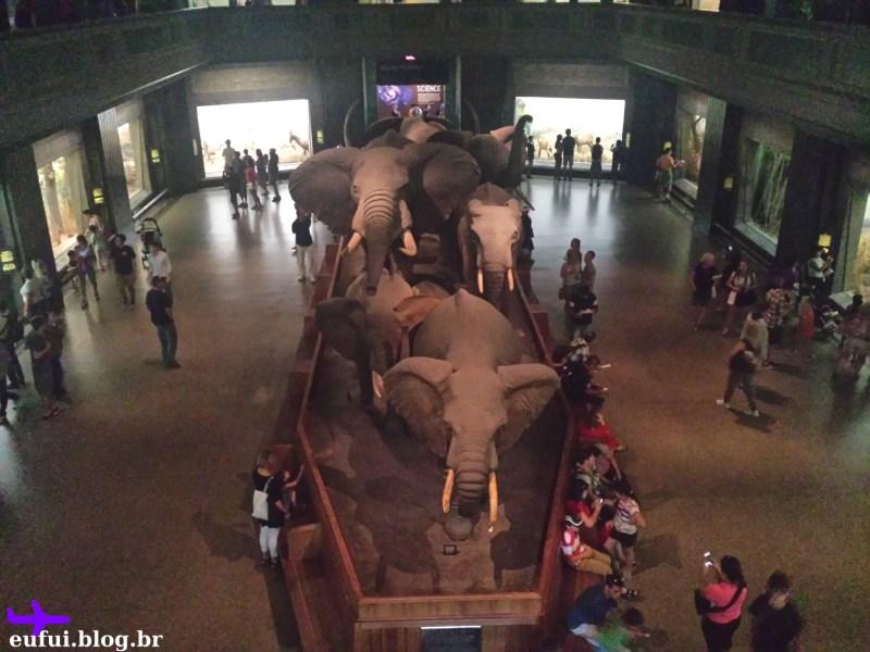 museu de historia natural mamiferos