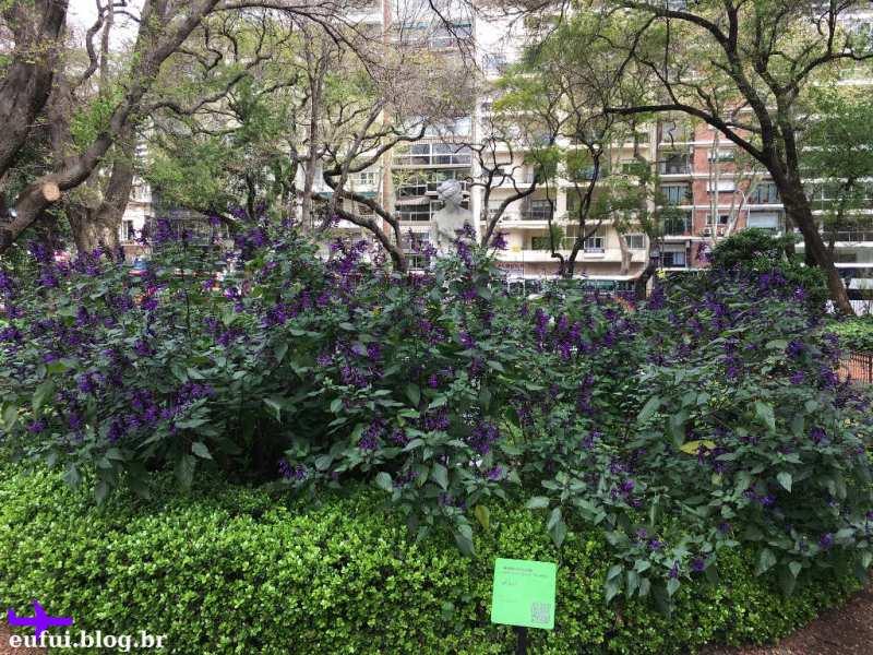 jardim botanico de buenos aires argentina venus
