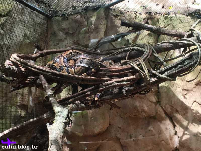 Cobra no Parque das Aves em Foz do Iguaçu