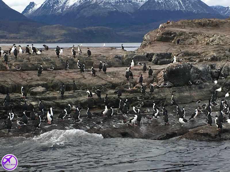 Navegação Canal do Beagle - Ilha dos Pássaros