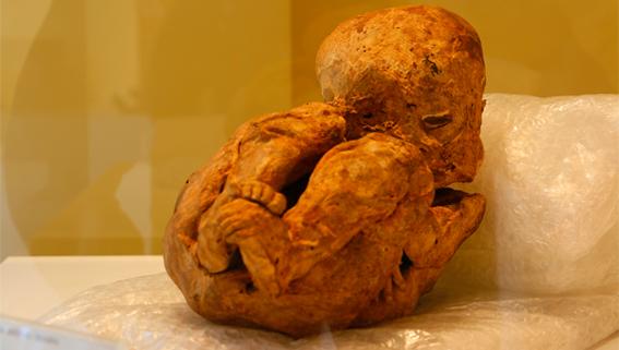 Mumia Wanra no Museu Egípcio de Curitiba - Paraná