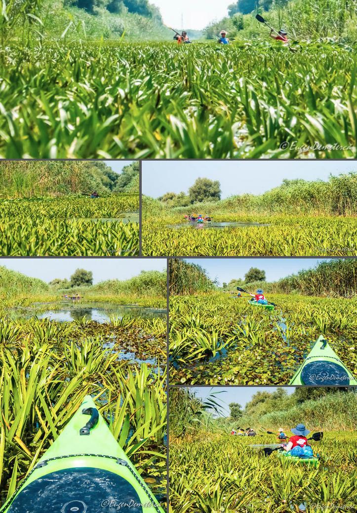 24 canal cu iarba - Cu caiacul, din Deltă până la mare