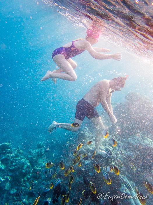 P1011338 - Snorkeling şi scubadiving în Egipt, de Revelion