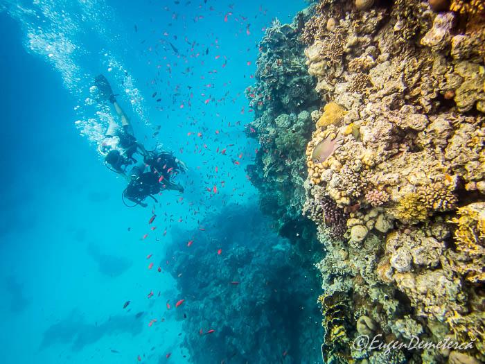 Scubadiving in Marea Rosie, langa corali