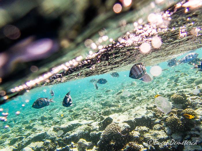 Corali si pesti la Blue Hole - Dahab, Marea Rosie