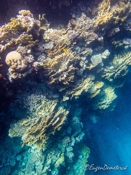 PC310943 1 - Snorkeling şi scubadiving în Egipt, de Revelion