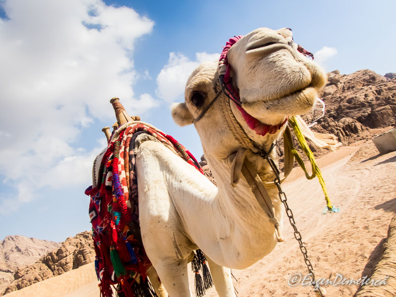 Camila de jos - Egipt, destinaţia pentru vacanţe exotice la super-preţuri!