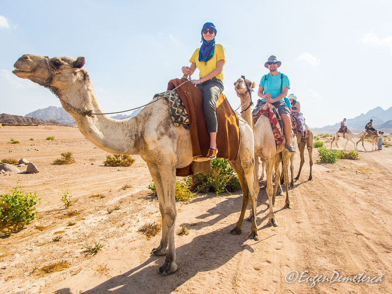 Elena si eu pe camile - Egipt, destinaţia pentru vacanţe exotice la super-preţuri!