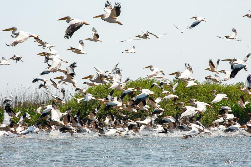 Pelicani Delta - Călătoria, cea mai bună alegere pentru dezvoltare personală