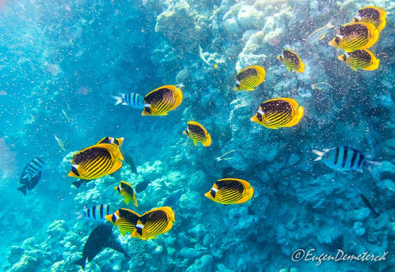 Pesti exotici Marea Rosie - Egipt, destinaţia pentru vacanţe exotice la super-preţuri!