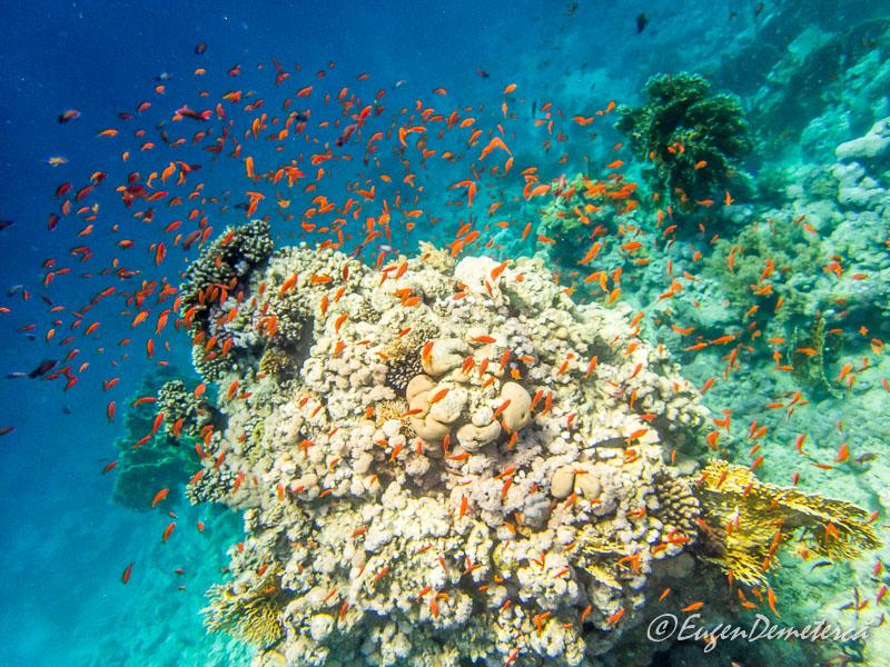 Pesti exotici rosii Marea Rosie - Egipt, destinaţia pentru vacanţe exotice la super-preţuri!