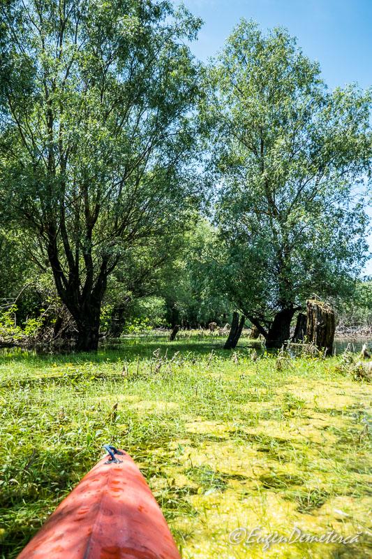 1120147 - Caiacind prin Delta Mică