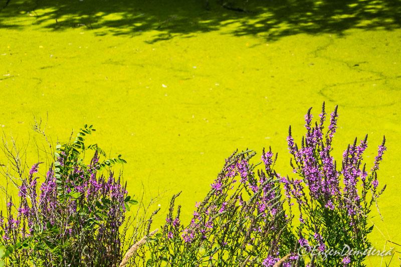 1140112 - Apocalipsă pe Lacul Morii