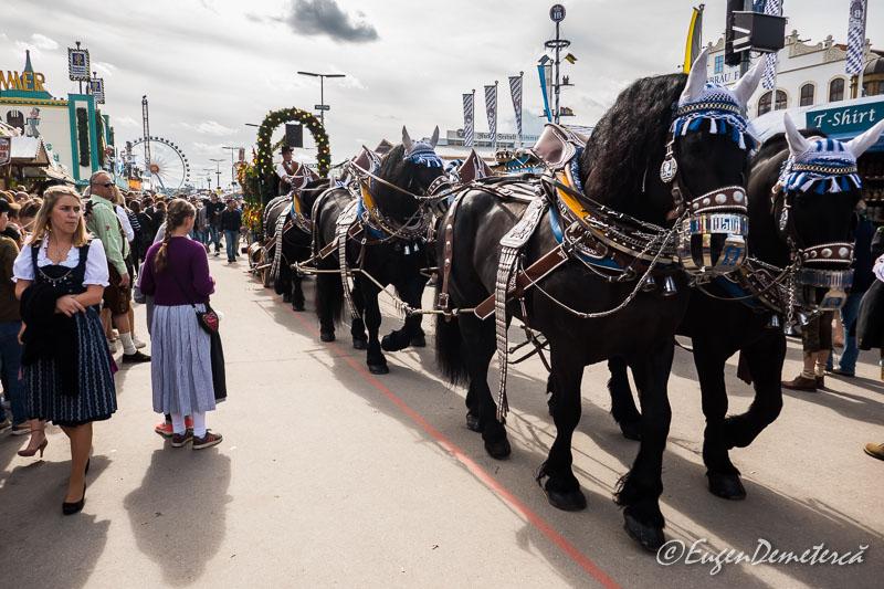 Oktoberfest - parada carelor si berariilor 5