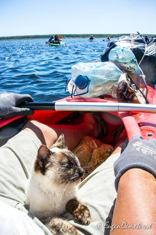 Pisici salvate in Delta Dunarii