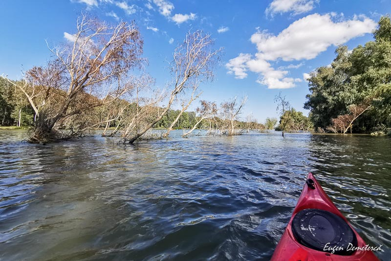Copaci in Dunare 1