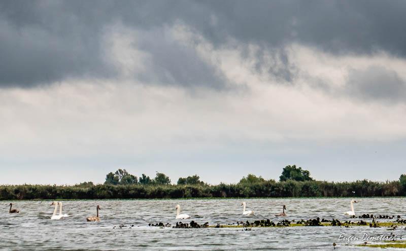 1270453 - Caiaceală în Delta tomnatică