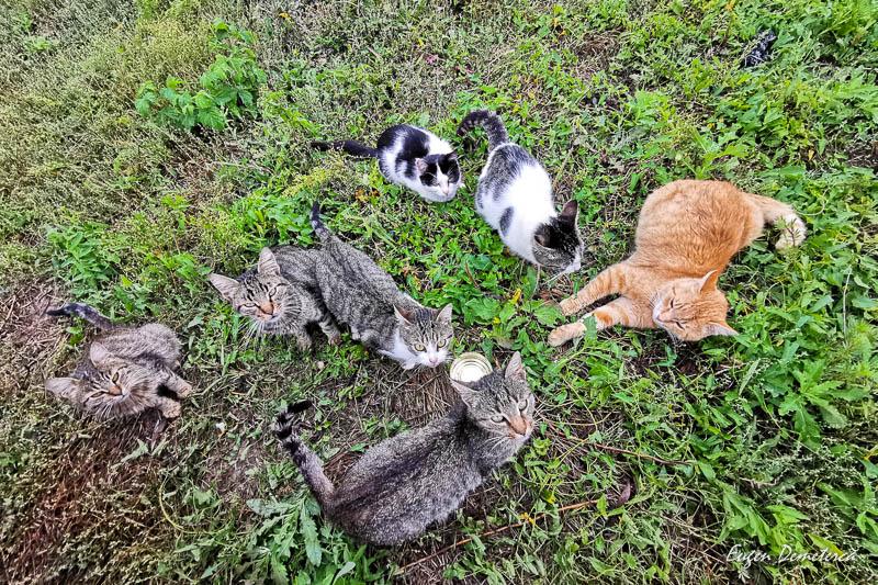 Pisici in Delta Dunarii