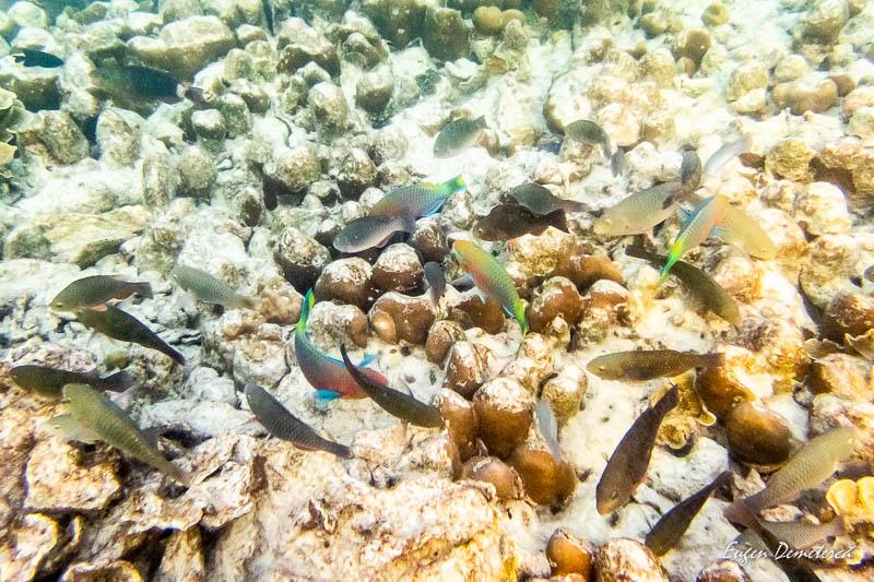 P1025376 - Koh Lipe - insula thailandeză ca o bijuterie