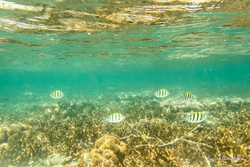P1035410 - Koh Lipe - insula thailandeză ca o bijuterie