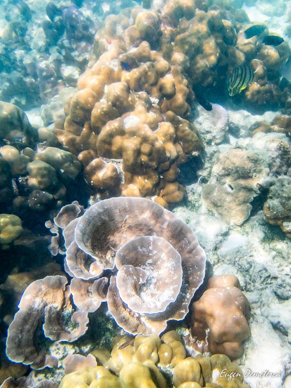 P1035436 - Koh Lipe - insula thailandeză ca o bijuterie
