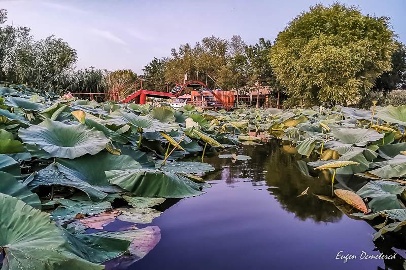 IMG 20200812 205044 - Desfătare cu apus și lotuși pe Snagov