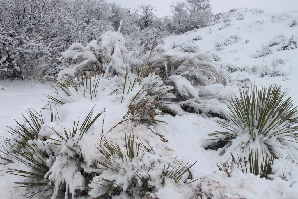 Soil Condition Biome Polar