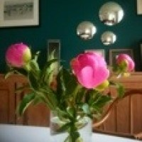 A week of peonies - Vive les pivoines