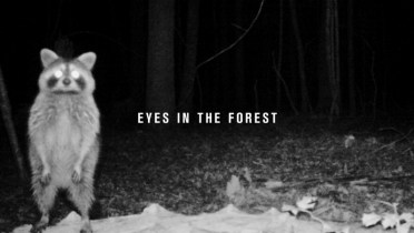 eyes in the forest-poster
