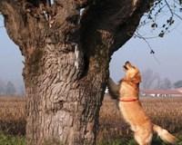Detective Teseo goes barking up the beetle tree