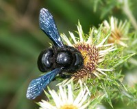 Enabling invertebrates to play an essential role in ecosystems