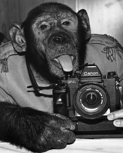 Lo sentimos, no sabemos qué cámara debes comprarte