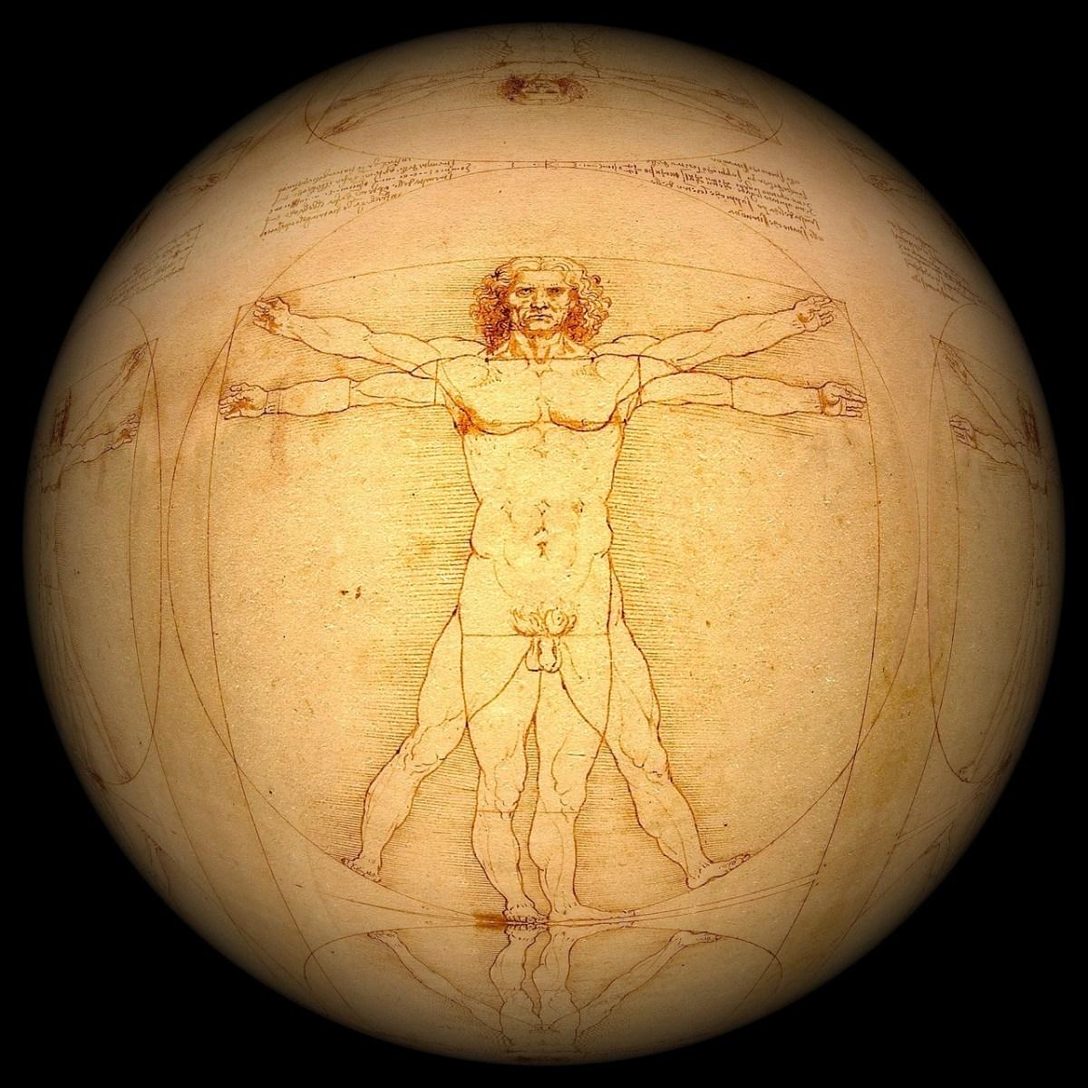 human, leonardo da vinci, the vitruvian man