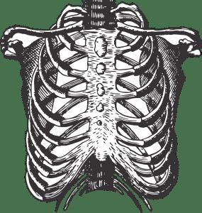 fetus ribs, ribs, fetus