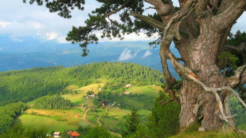 travel-serbia-kamena_gora_bor