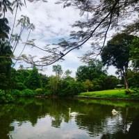 Return to Botanics - Singapore Botanical gardens
