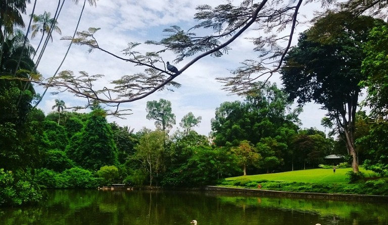 Return to Botanics – Singapore Botanical gardens