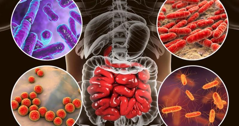 MICROBIOTA -nuevos ingredientes moduladores de la microbiota humana