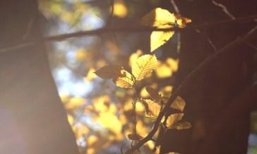 Gegenlicht, Wald