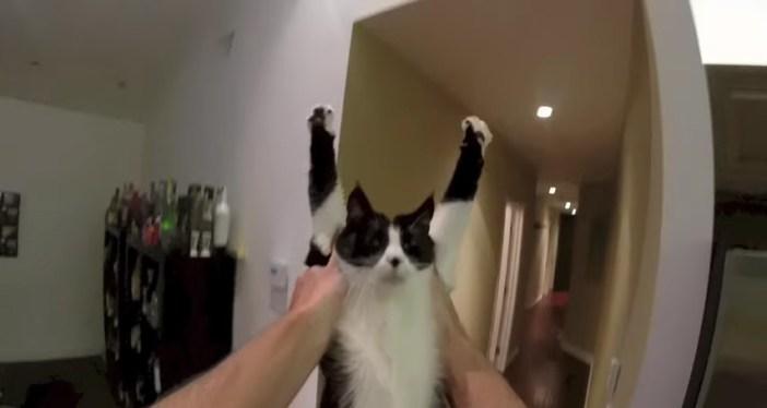 バンザイする猫