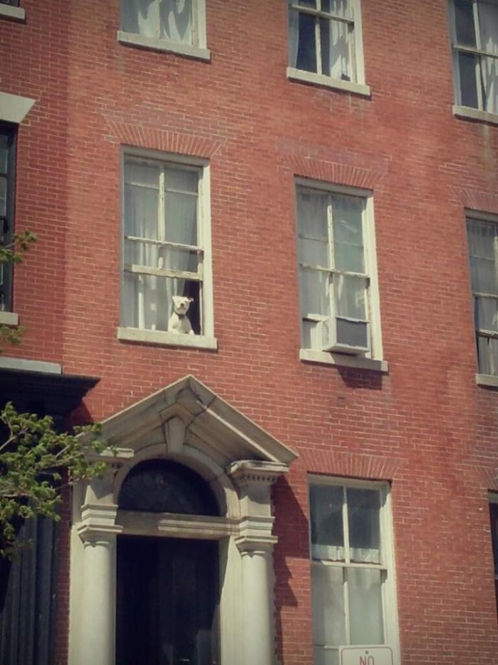 窓際でご主人さまの帰りを待つ犬
