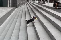 一人でボール遊びをする犬